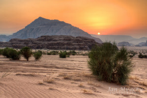 Sunrise in Wadi Rum desert with high mountain and bush, Jordan